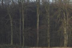 a-Adlerhorst